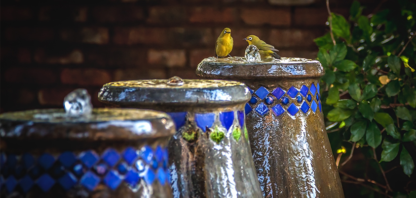 birds on fountain